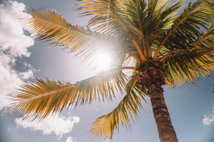 sonce UV žarki