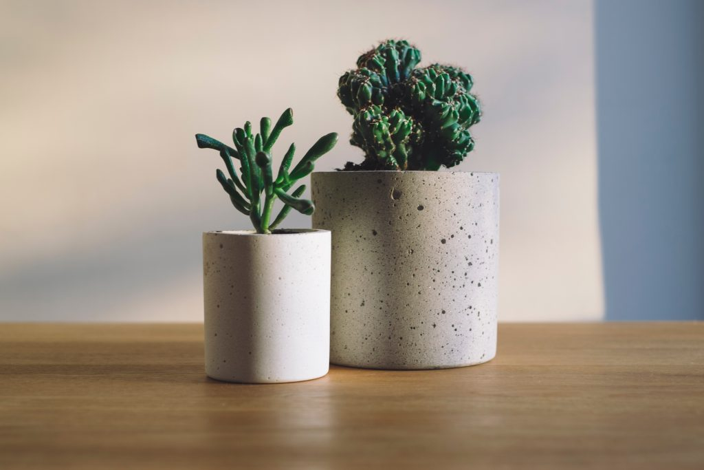 spletne-prodajalne-sobnih-rastlin