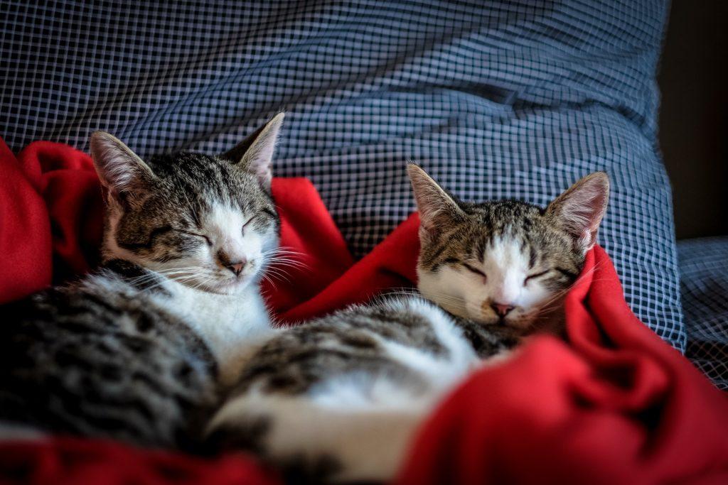 spalni-položaj-živali